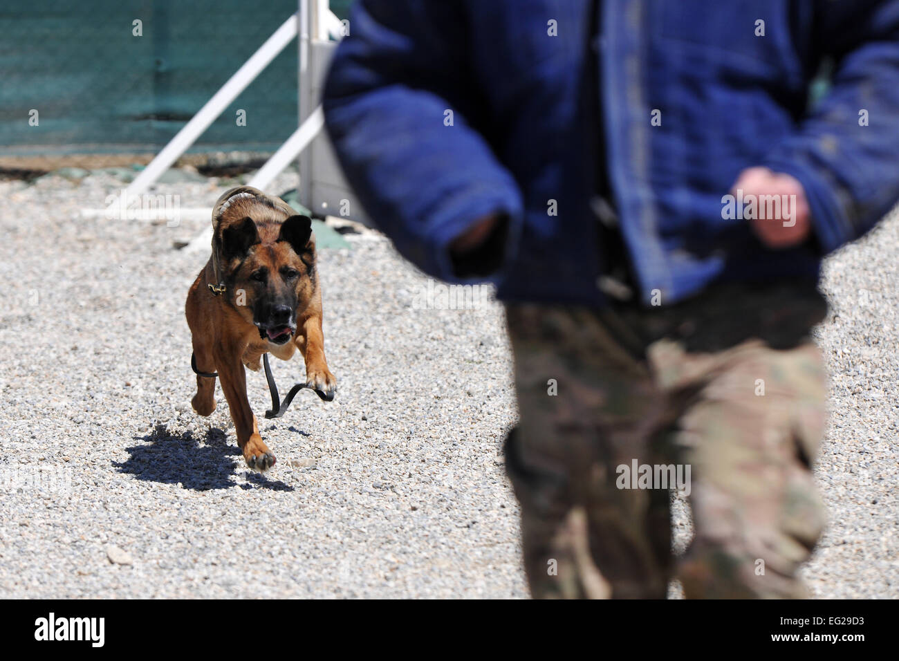 Senior Master Sgt. Edward Keenan, 455th Expeditionary Security Forces Group operations superintendent, and Military Working Dog Ruth perform controlled aggression training at Bagram Airfield, Afghanistan, April 28, 2013. Controlled aggression training creates scenarios in which the MWD team responds to a suspect or unidentified individual.  Senior Airman Chris Willis Stock Photo