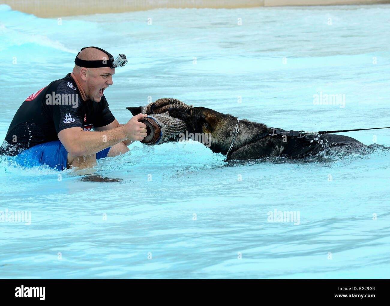Ryan Flannigan, Tampa Police Department canine handler, assists Zoran, 6th Security Forces squadron military working - Stock Image