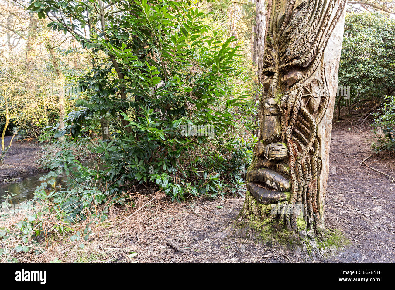 Tribal face carved in tree, Tredegar House Country Park, Newport, Wales, UK - Stock Image