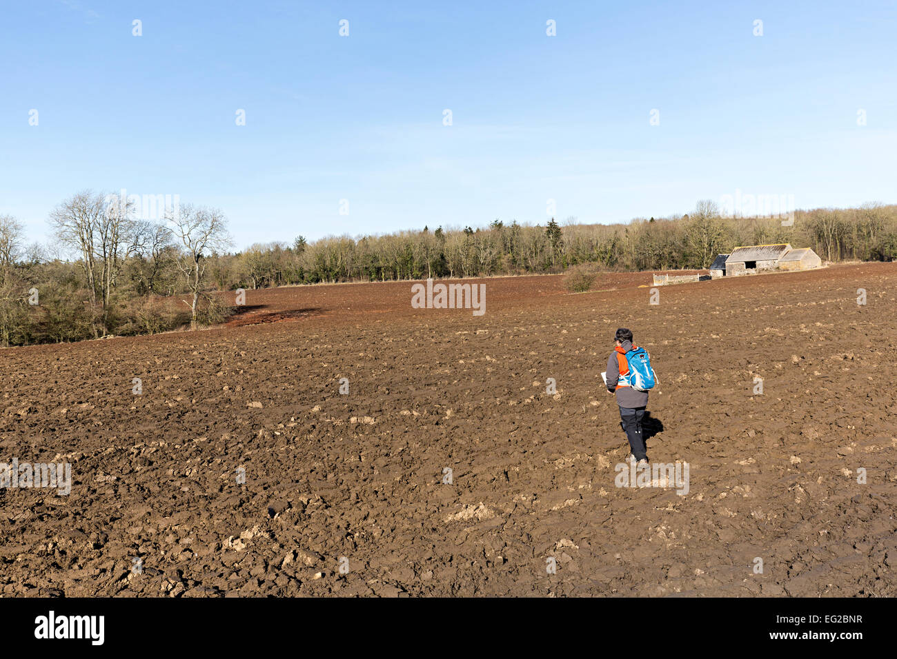 Walker crossing ploughed field using map to follow line of footpath, St Briavels, Gloucestershire, England, UK - Stock Image