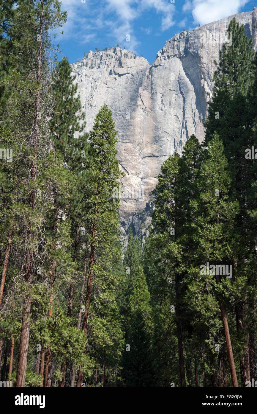El Capitan seen through the trees in Yosemite Valley, Yosemite, California Stock Photo