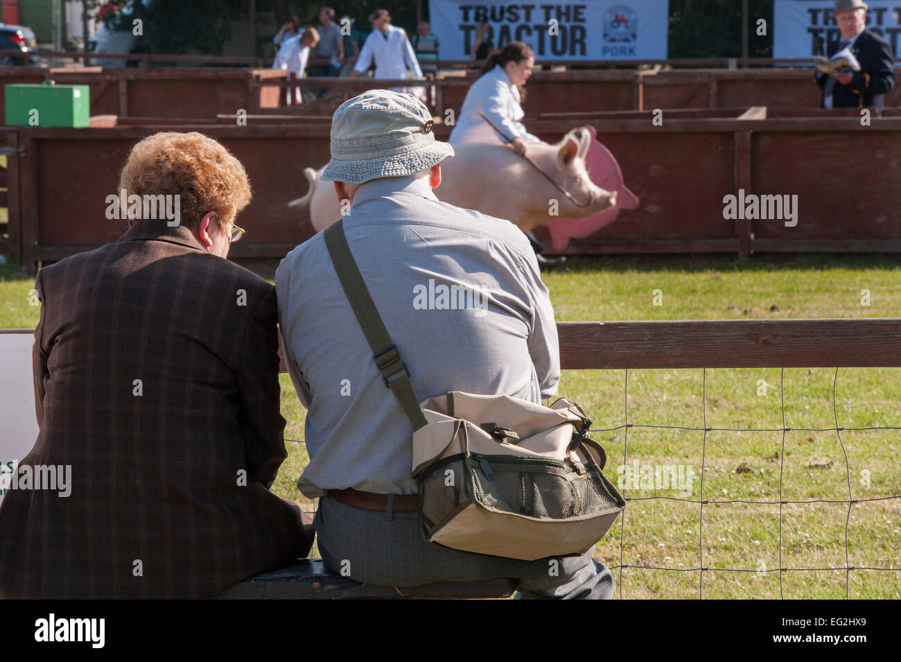 Day out for 2 elderly spectators who watch a Large White Pig & handler, walking round show ring - The Great - Stock Image