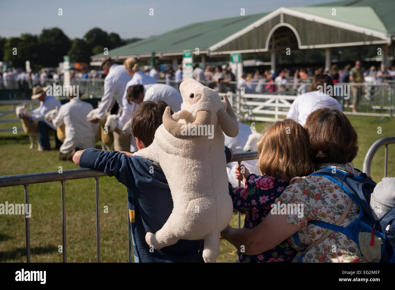 Under summer sun, mother & 2 young children, watch sheep competition at Great Yorkshire Show, England, UK. Amusing, - Stock Image