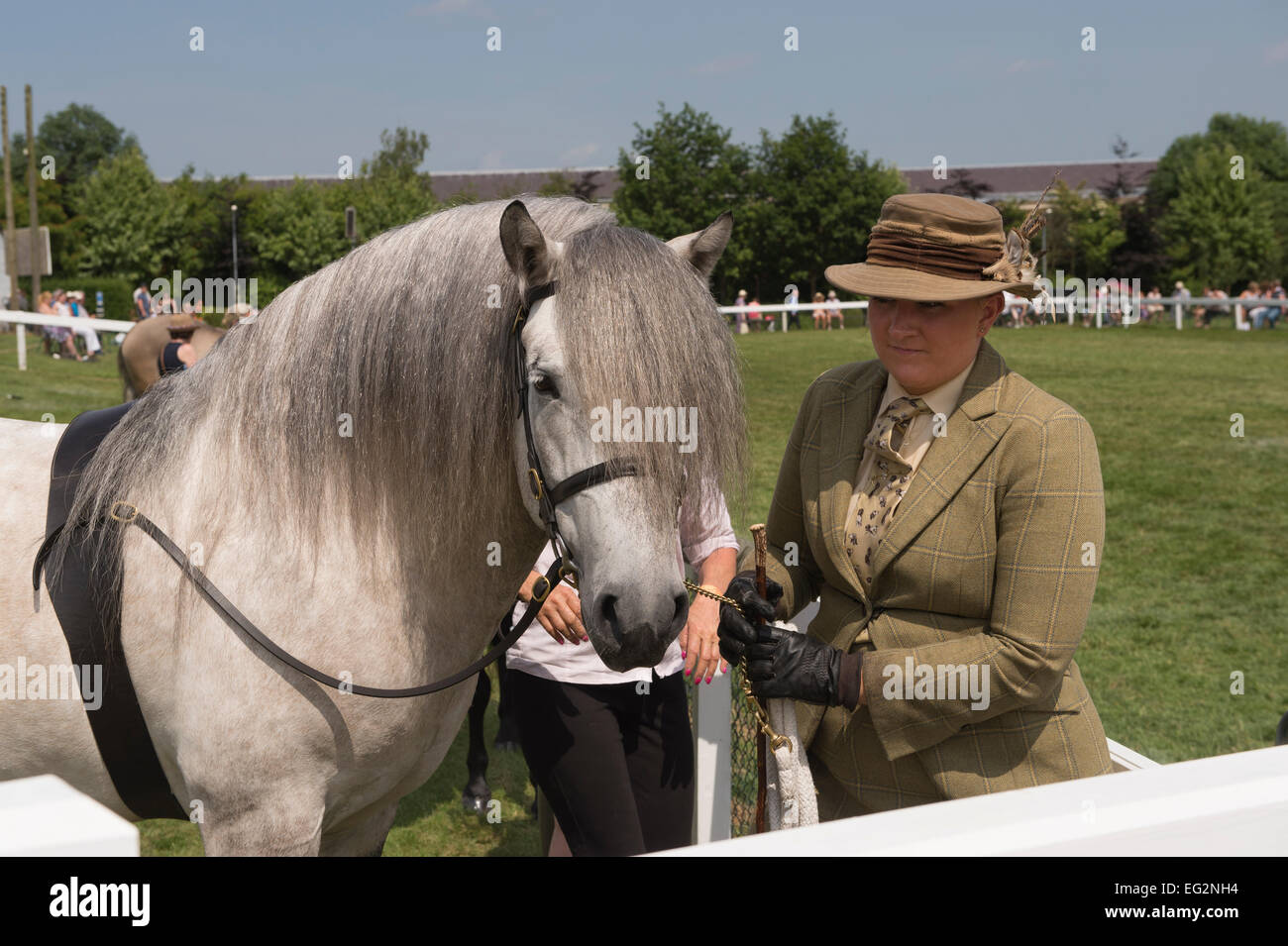A female entrant dressed in riding clothes, standing with her grey horse in one of the equine classes at The Great - Stock Image