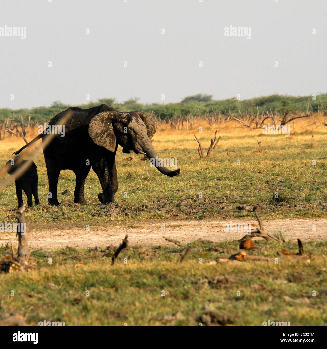 Scared Elephants Stock Photos & Scared Elephants Stock Images - Alamy
