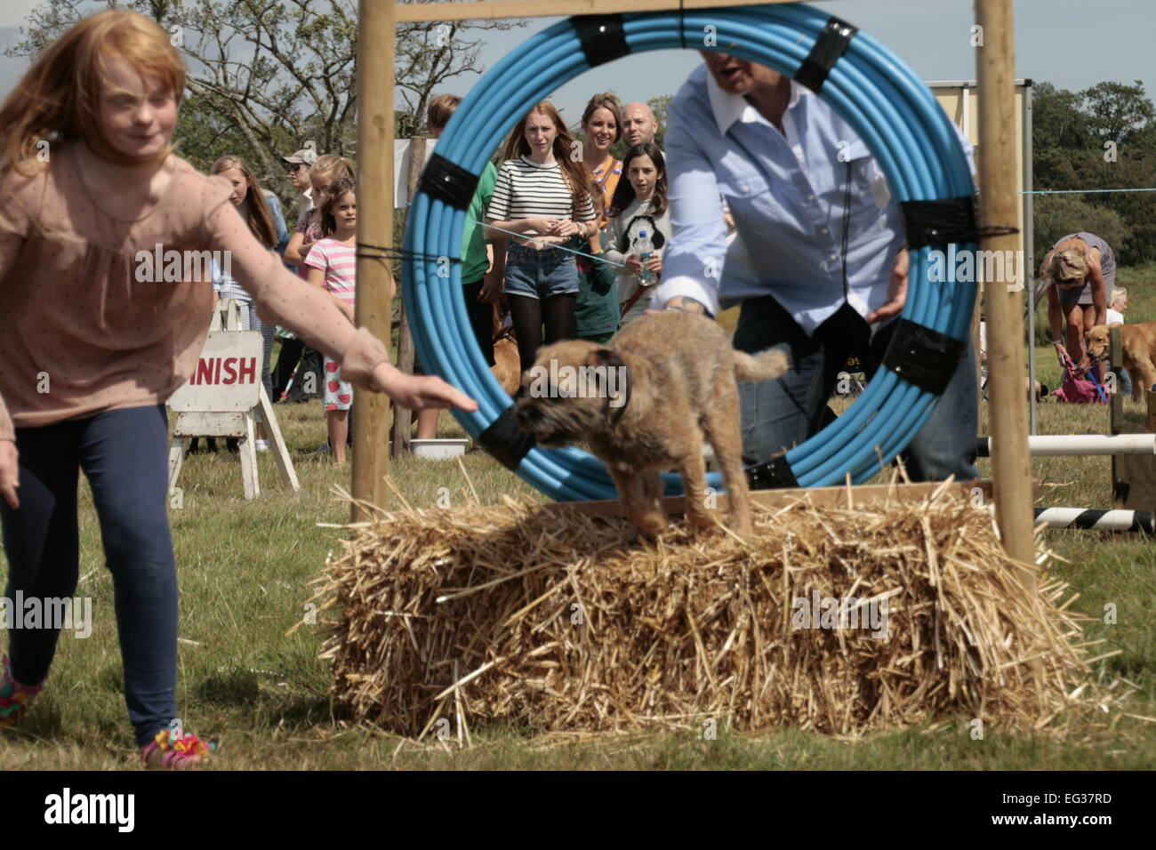 Dog agility at the Ellingham & Ringwood Agricultural Show - Stock Image