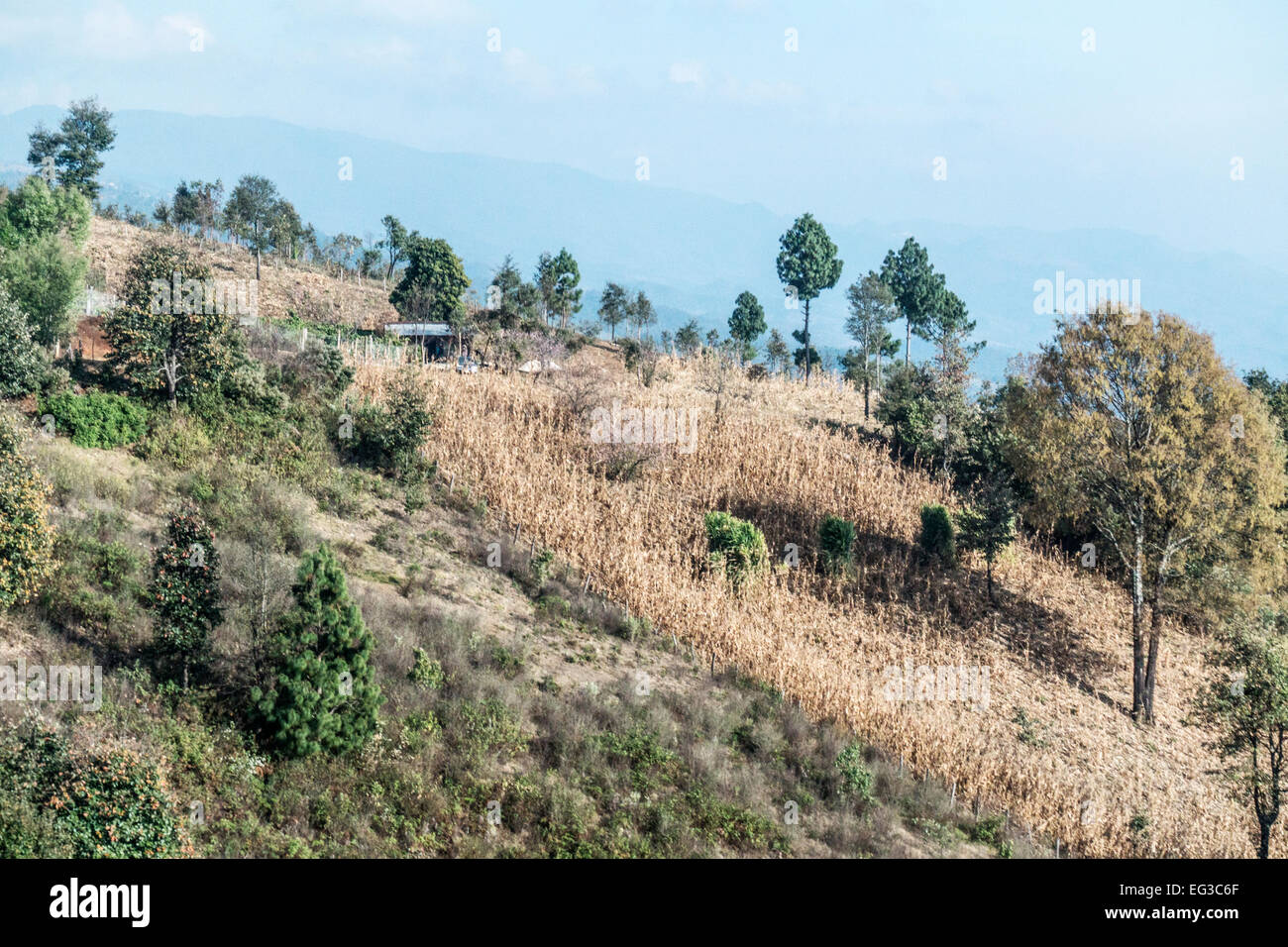 high altitude mountainous rural countryside near San Cristobal de las Casas Chiapas with subsistence farming on - Stock Image