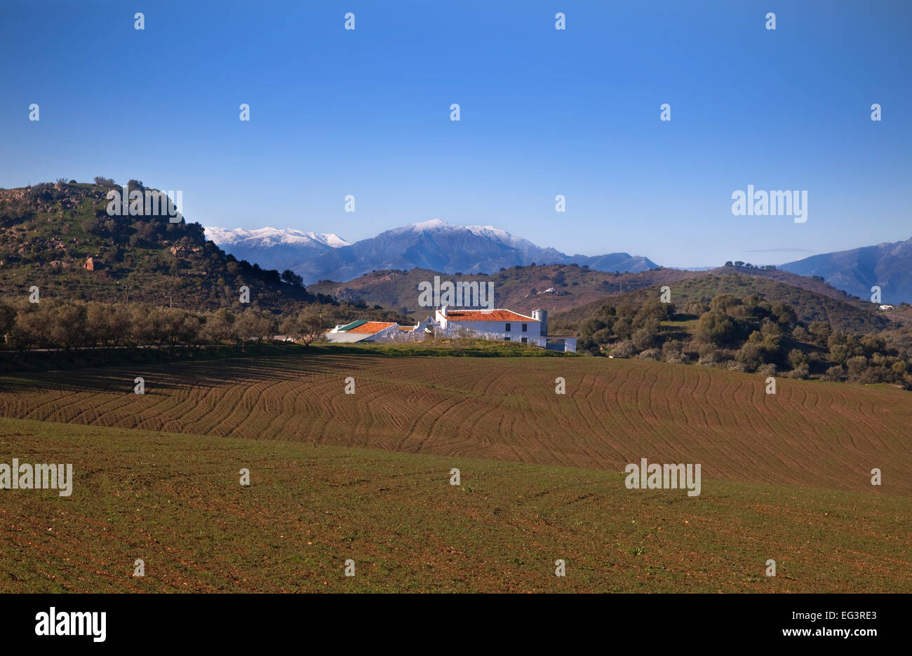 Farmhouse and newly planted farmland with snow clad mountains, Campo de Camera, Near Almogia, Malaga Province, Andalucia, - Stock Image