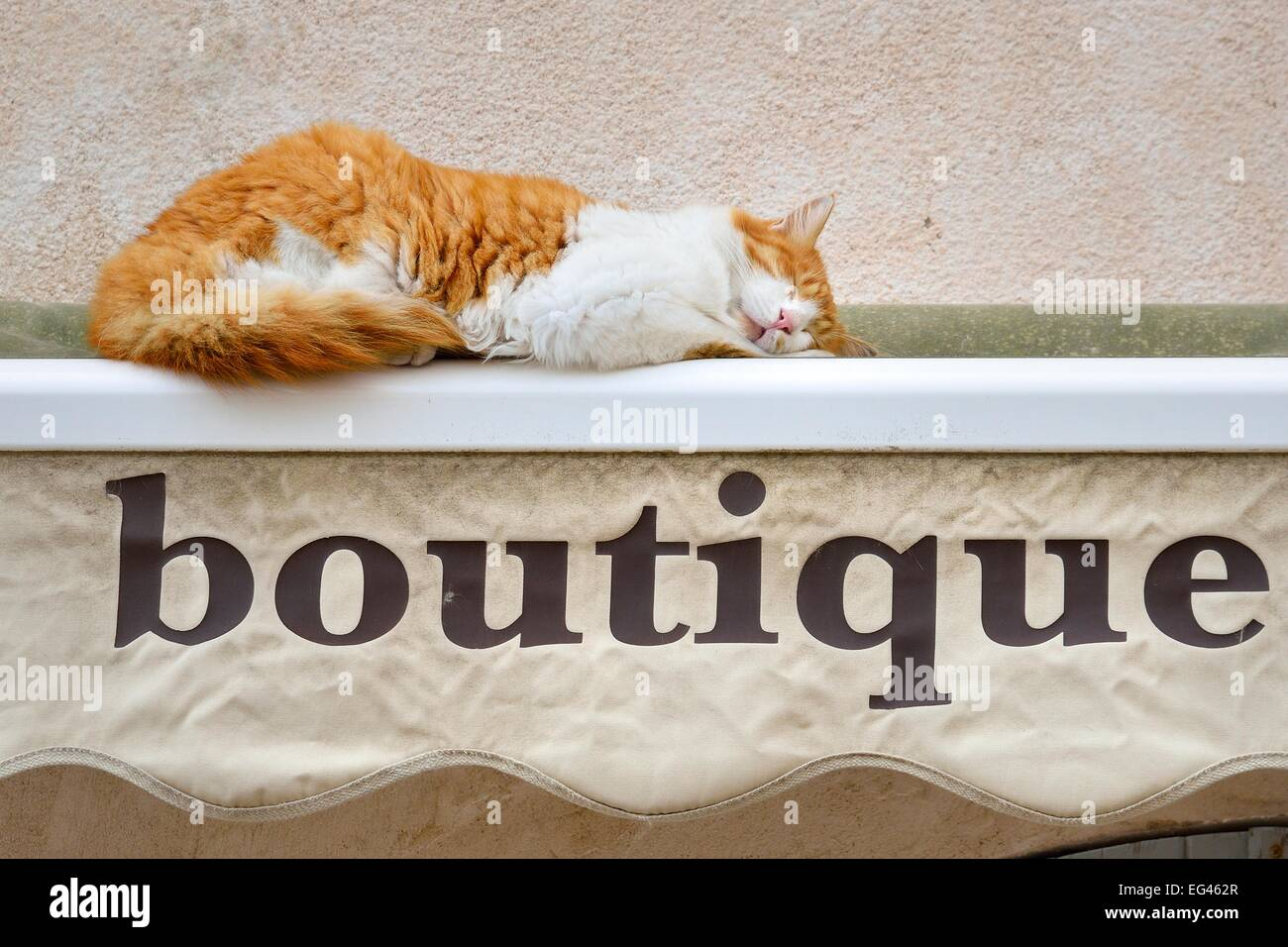 Sleeping cat on a rolled-up awning of a boutique, Bonifacio, Corse-du-Sud, Corsica, France - Stock Image