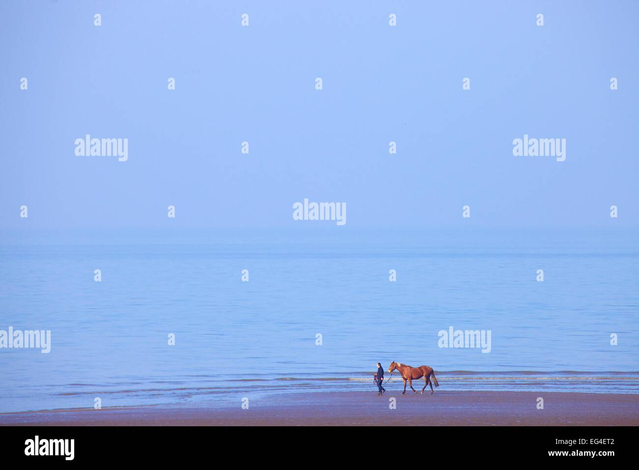 Man and horse walking on a beach by the sea. Allonby Bay Cumbria England UK - Stock Image