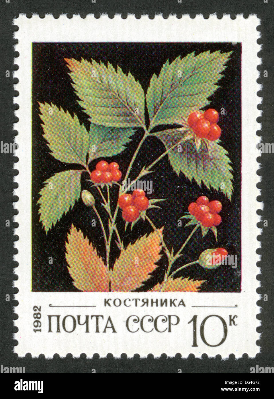stone berry,USSR,post mark,stamp,1982 year,flowers, plants, flora,flower,berries Stock Photo