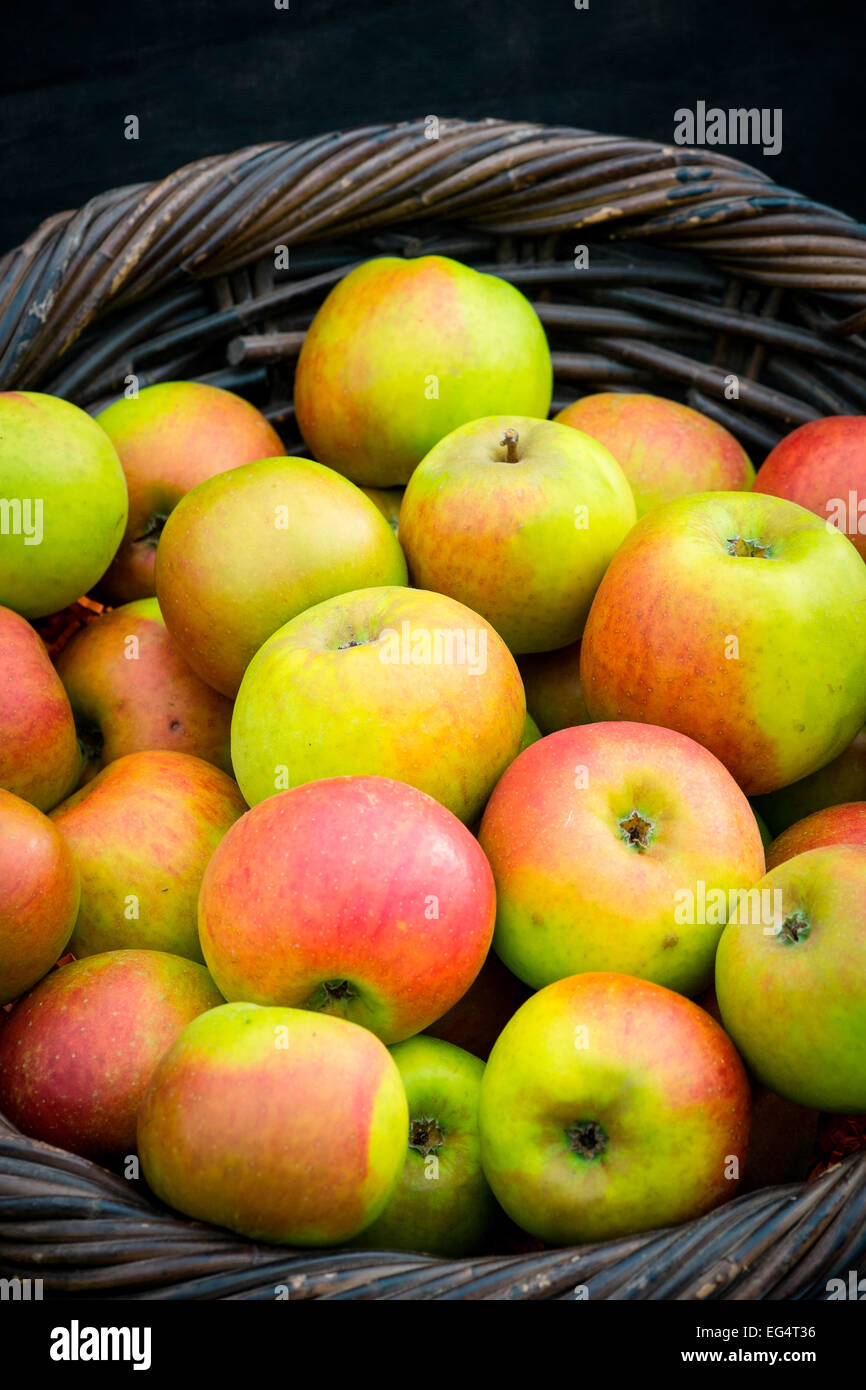 Traditional wicker basket full of fresh red and green heritage apples - Stock Image
