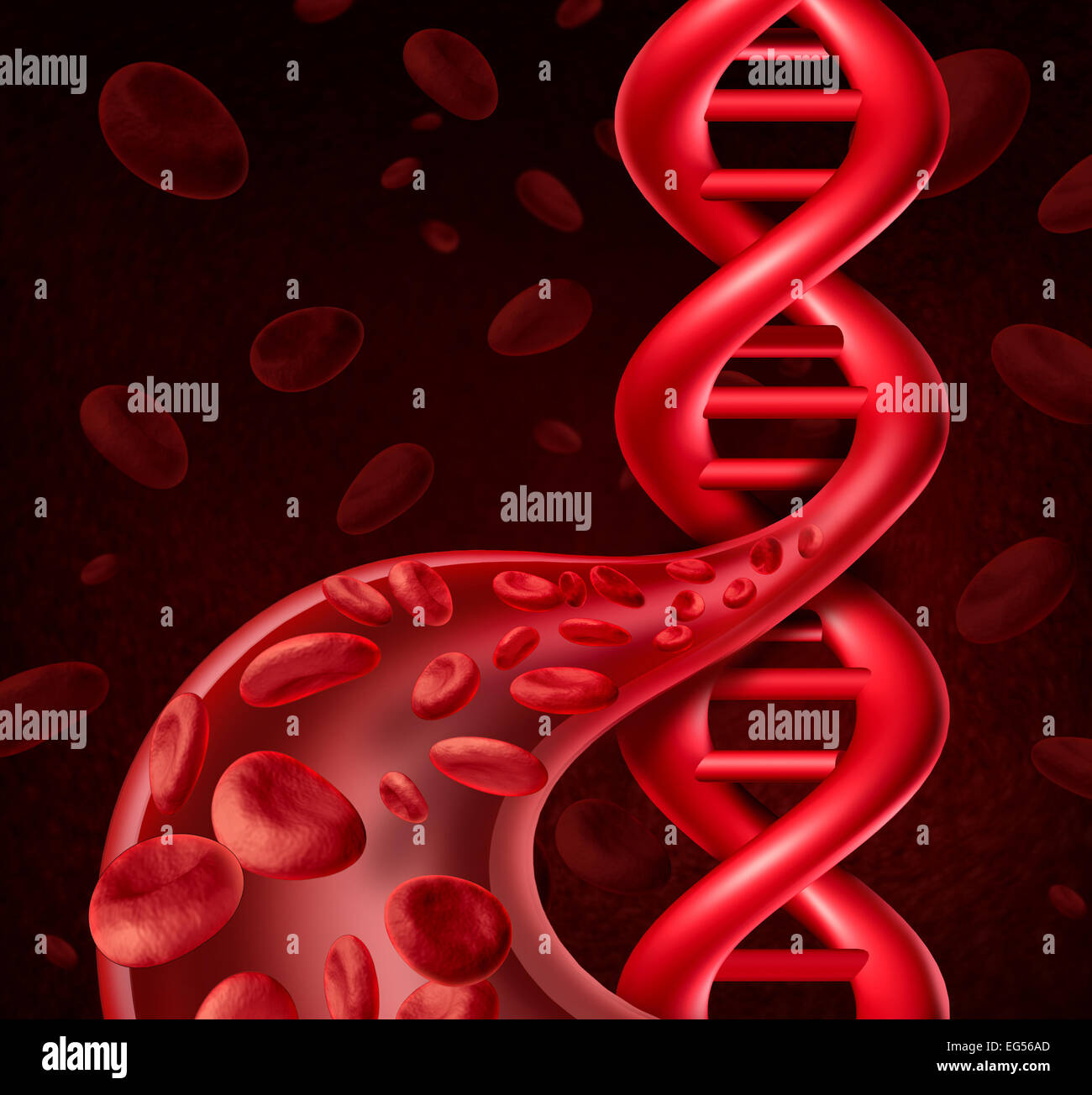 DNA blood cell concept as human viens and arteries shaped as a double helix symbol for genetic information or biological - Stock Image