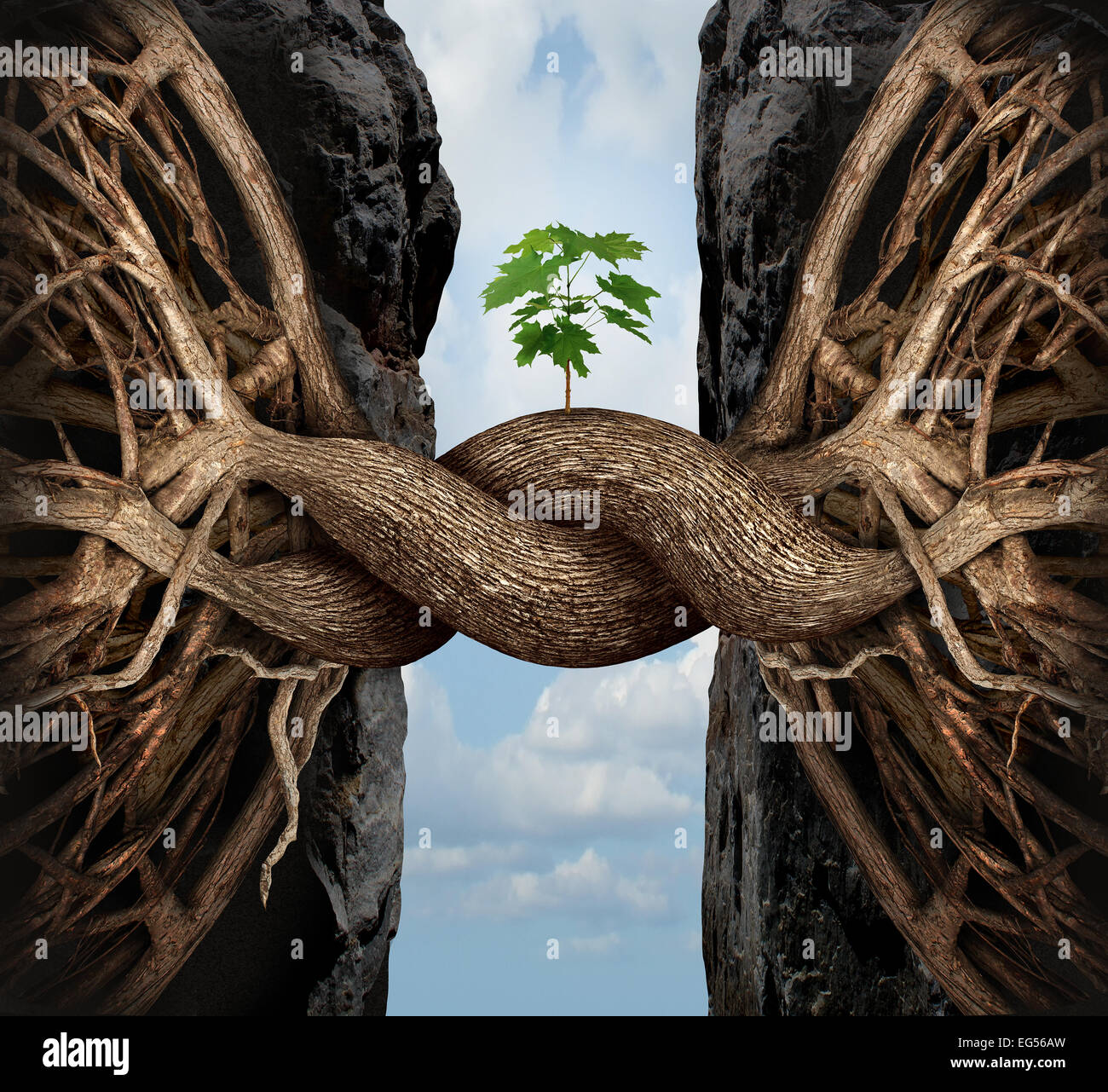 Unity growth concept and bridge the gap business symbol as two tree roots on a high steep cliff connecting and merging - Stock Image
