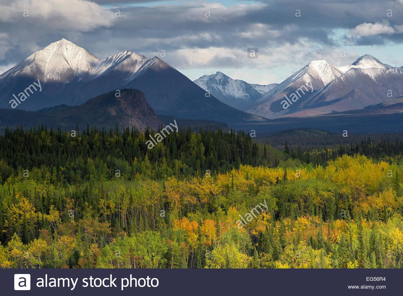 Denali national Park - Alaska : fall colors Stock Photo