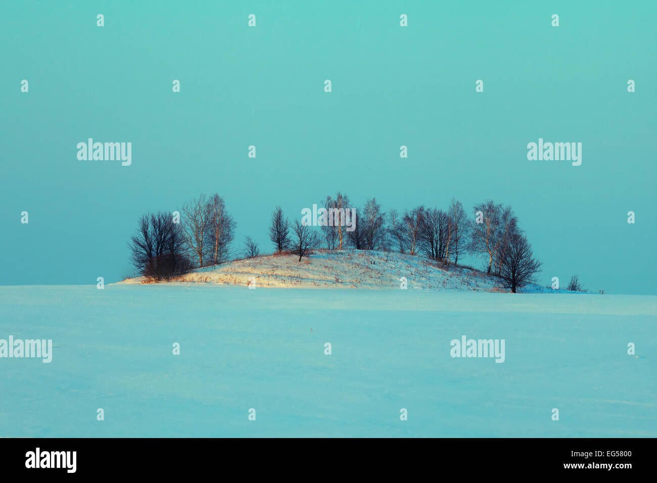 Hill with trees in the middle of a snow-covered field. Blue color toning - Stock Image