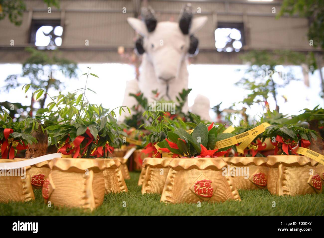 Chinese New Year plants in gold pots to usher in the Year of the Goat. - Stock Image