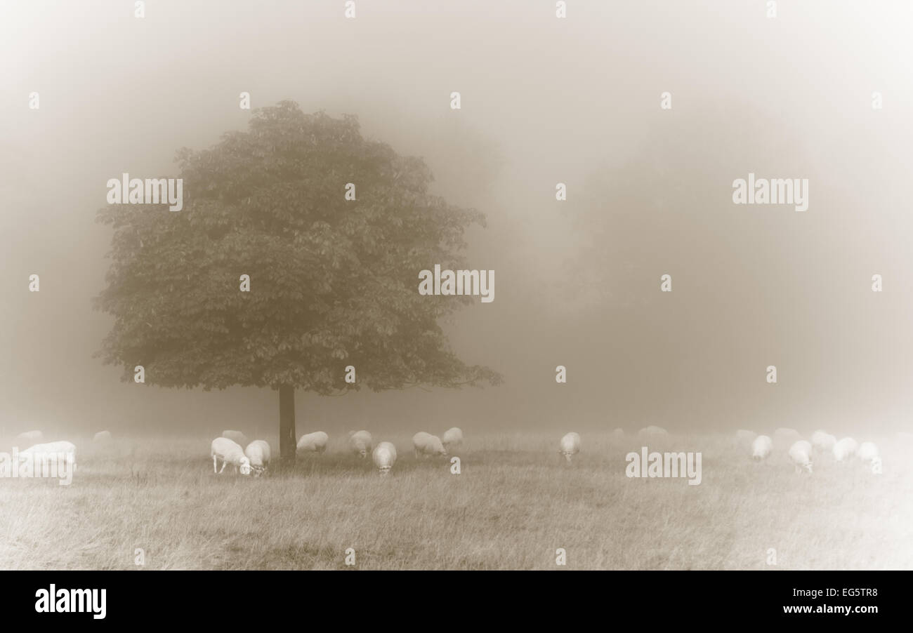 Vintage sheepscape - Sheep grazing under a tree treated in sepia tones - Stock Image