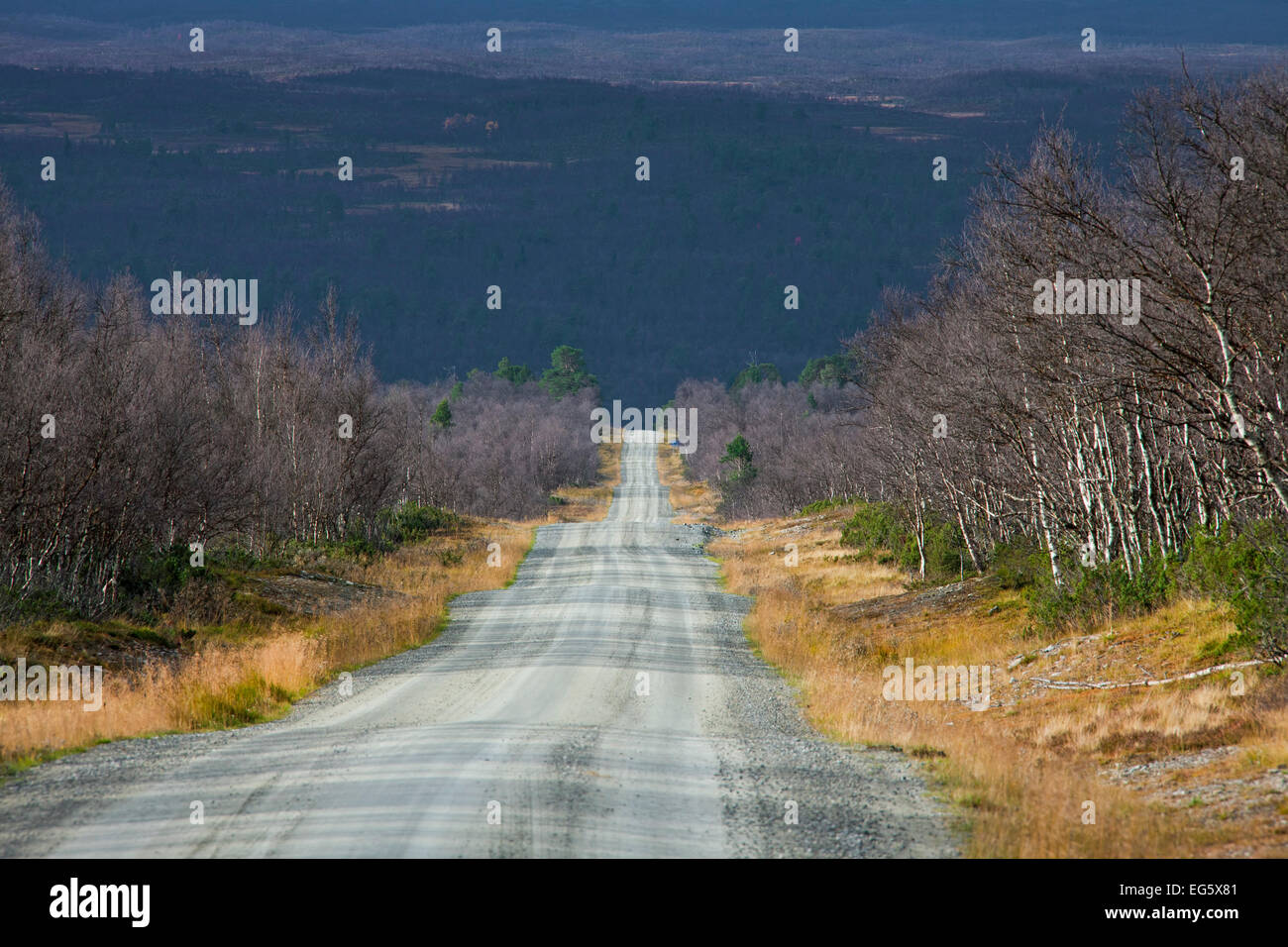 Desolate dirt road through birch forest in autumn, Jämtland / Jaemtland, Sweden - Stock Image