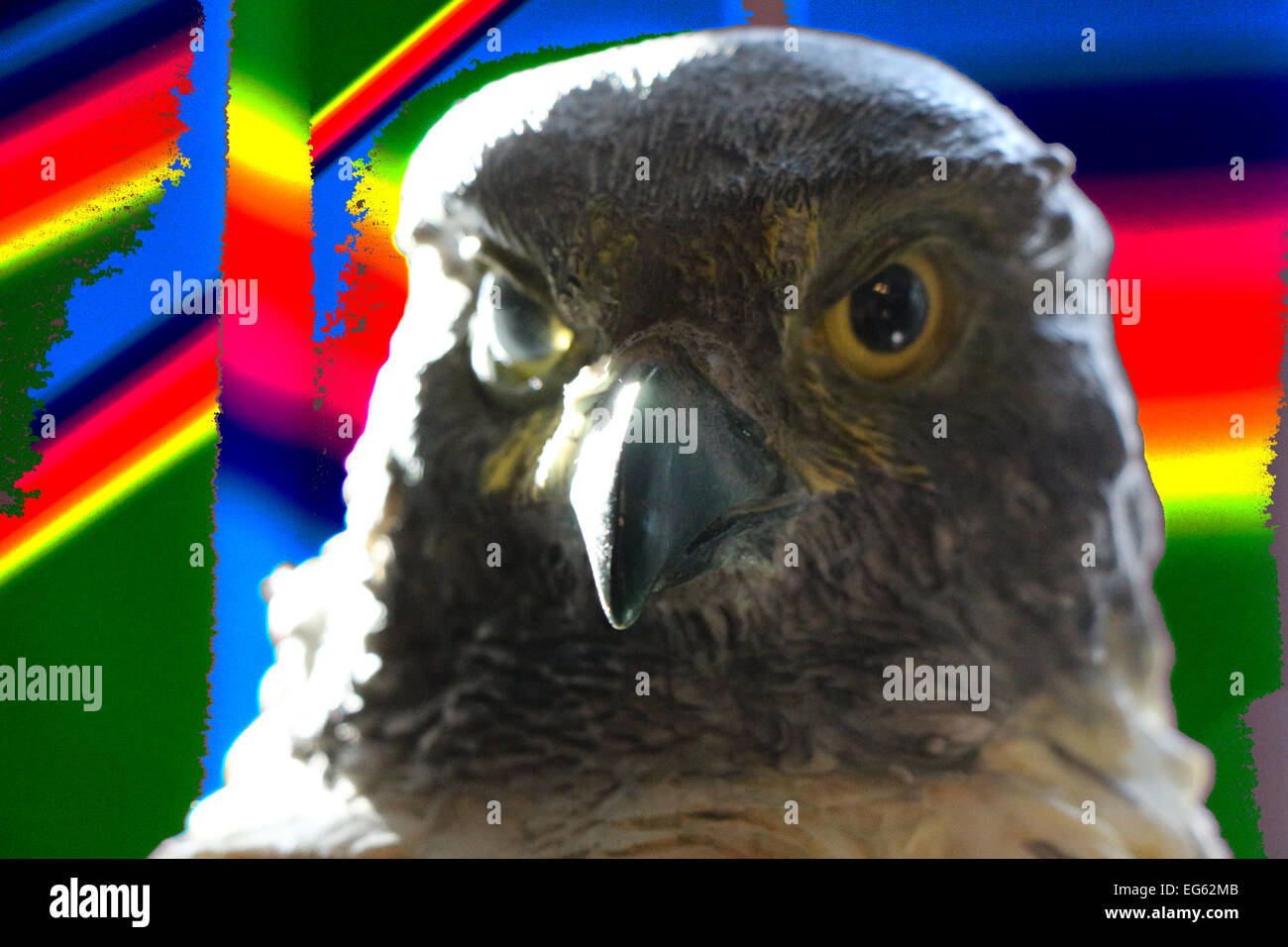 1;abstract bird;abstract birds;animal;animals;bird;bird of prey;birds;birds of prey;brown;color image;color images;color - Stock Image