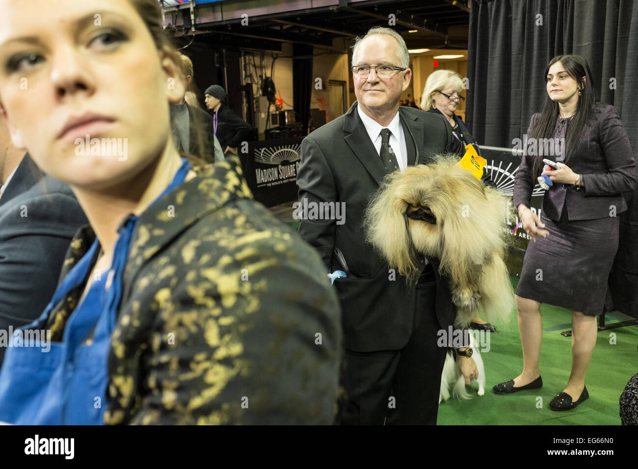 New York, NY, USA. 16th Feb, 2015. Pekingese Pequest General Tso under the arm of his handler before entering the Stock Photo