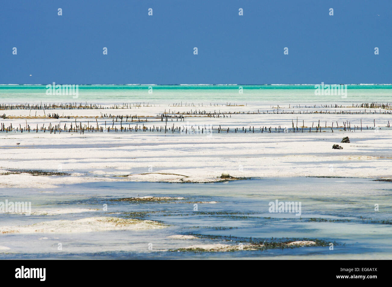 Tidal flats along the east coast of Zanzibar - Stock Image