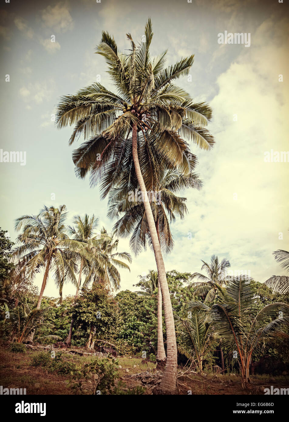 Vintage retro stylized tropical nature background with palm trees. - Stock Image