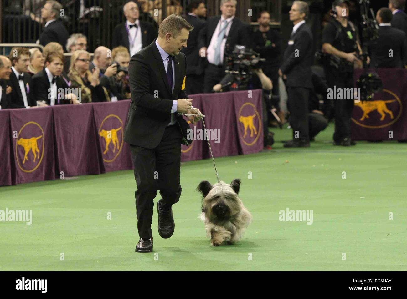 New York, NY, USA. 17th Feb, 2015. Charlie, a skye terrier, performs at the 139th Annual Westminster Kennel Club Stock Photo