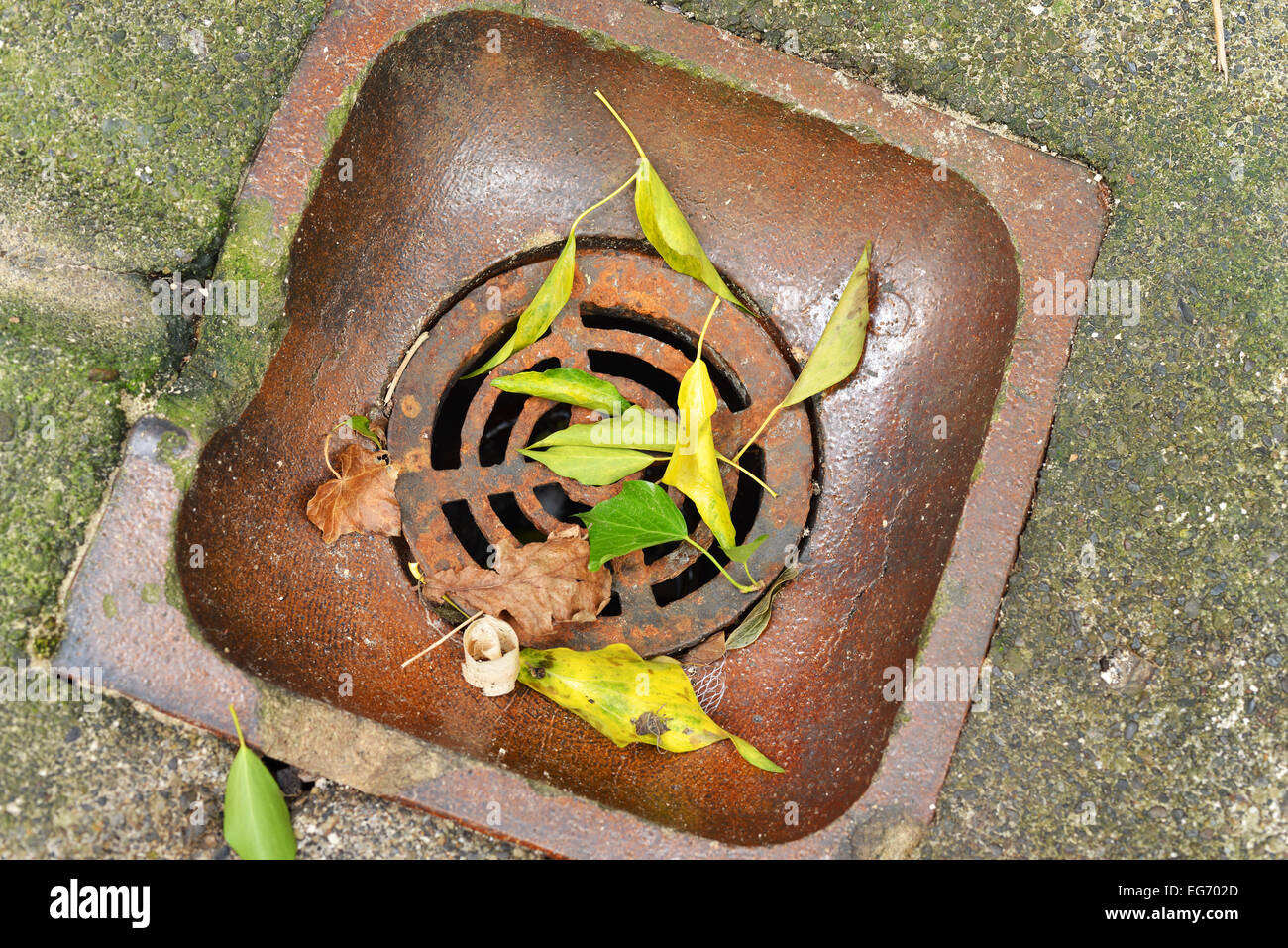 Drain with leaves - Stock Image