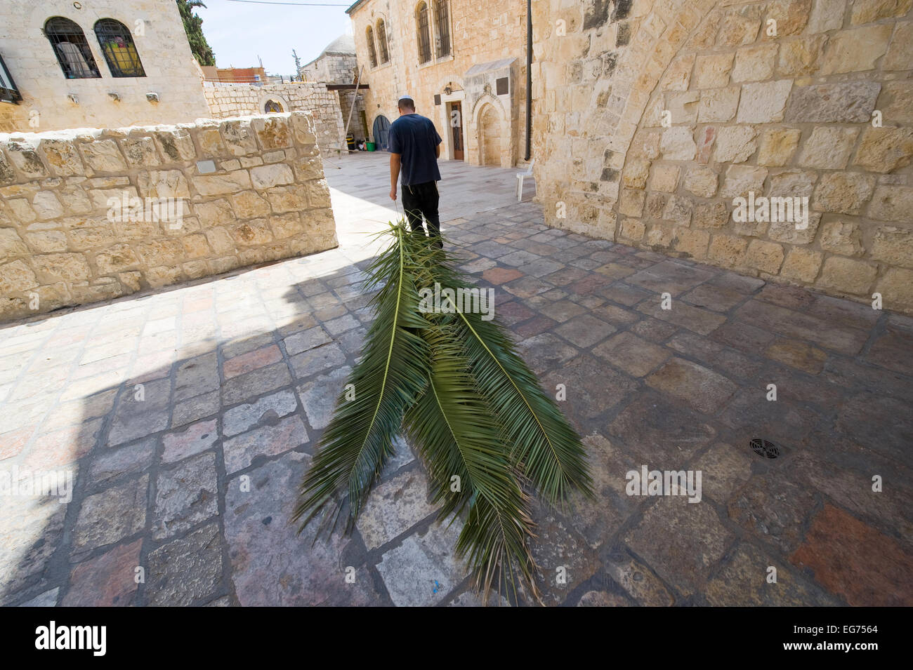 A jewish man is pulling palm leaves with him to prepare for the 'feast of tabernacles' als - Stock Image