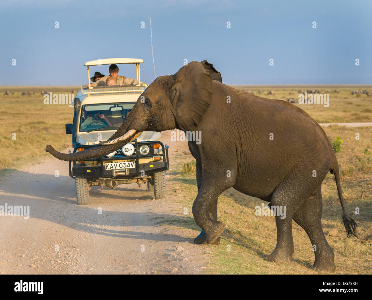 AMBOSELI, KENYA - September, 18, 2008: Elephant safari in Amboseli National Park, Kenya - Stock Image