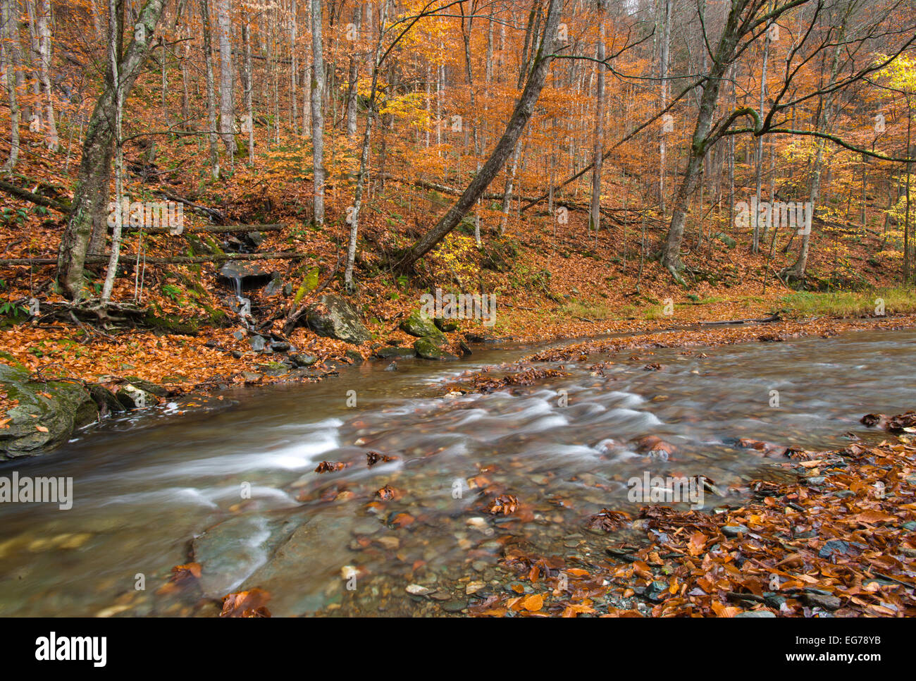 Water flowing swiftly in these colorful woods - Vermont, USA - Stock Image