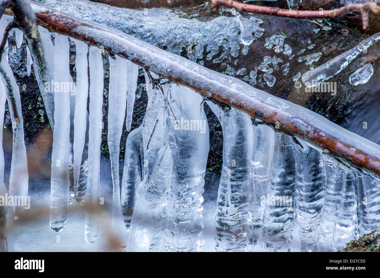 Icicles on a twig - Stock Image