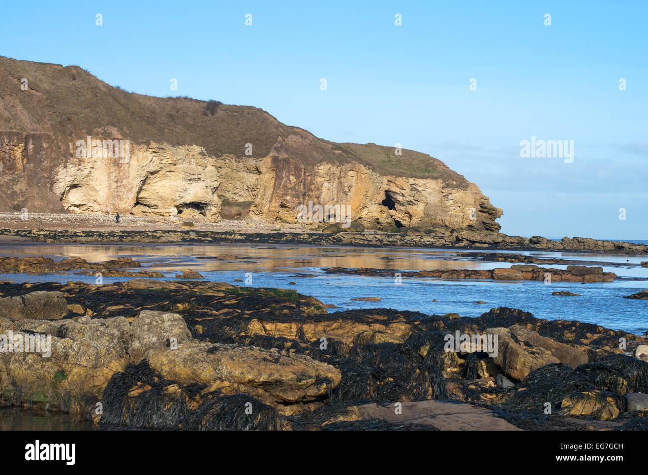 Blackhall Rocks County Durham coast, England, UK - Stock Image