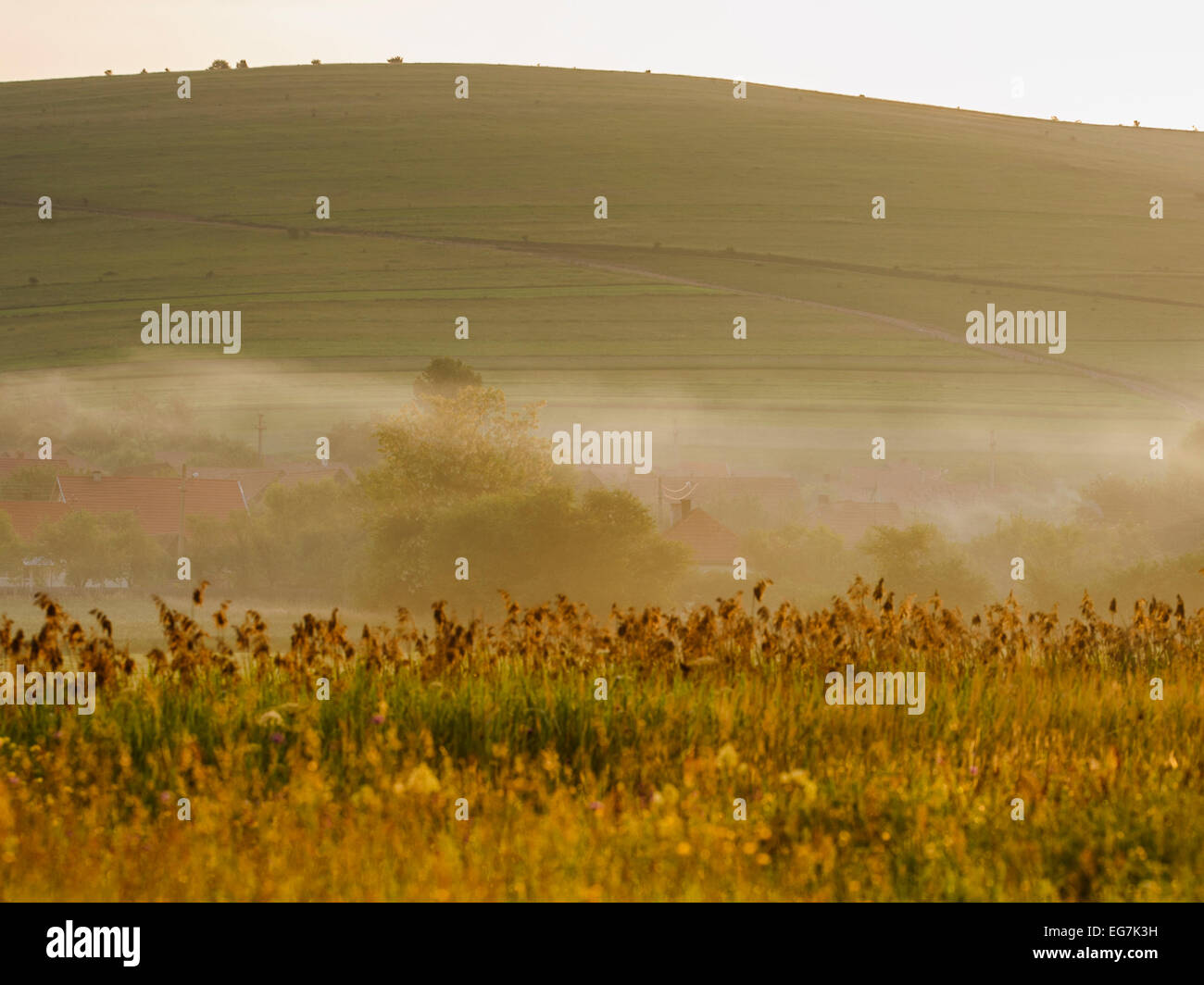 Misty morning landscape with reed in foreground and a village in background. Dreamy, fog, dusk, dawn, hills. Stock Photo