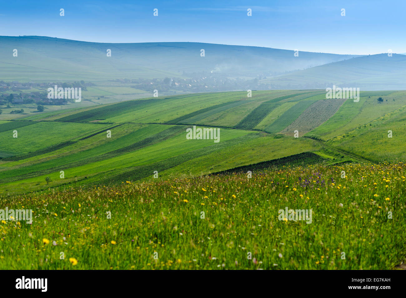 Green hills and meadow with wild flowers in hills, mountains, countryside. Romania, Transylvania, Harghita. Stock Photo
