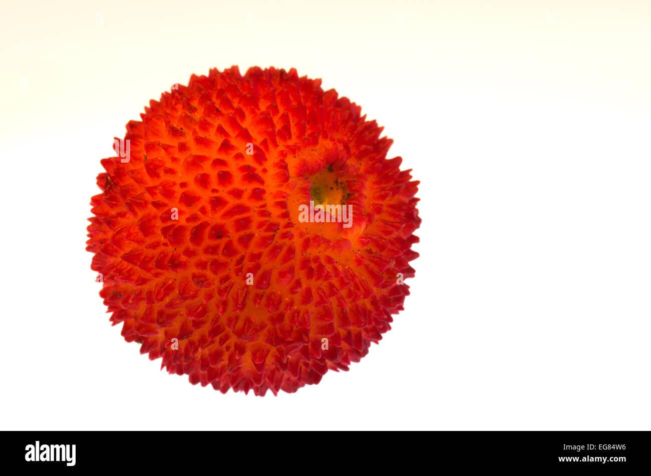 Strawberry tree fruit - Arbutus unedo - Stock Image
