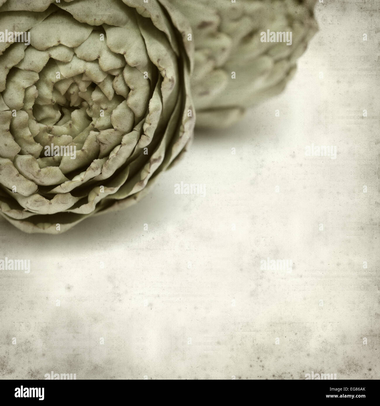 textured old paper background with artichoke - Stock Image