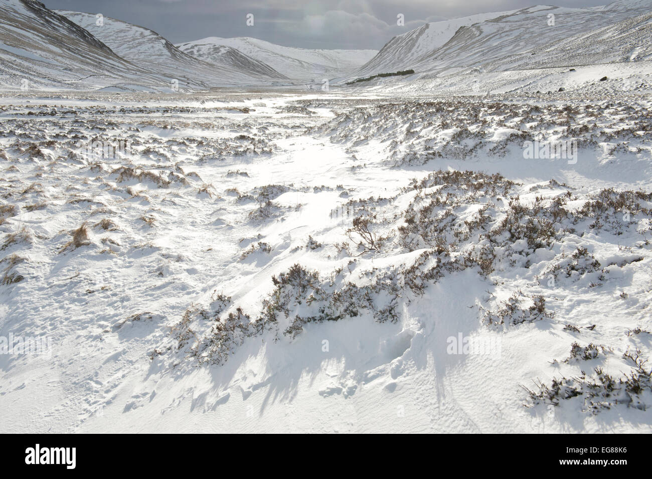 Snow covered heather in the Braemar Pass, Cairngorms National Park in winter. Scottish Highlands. Scotland - Stock Image