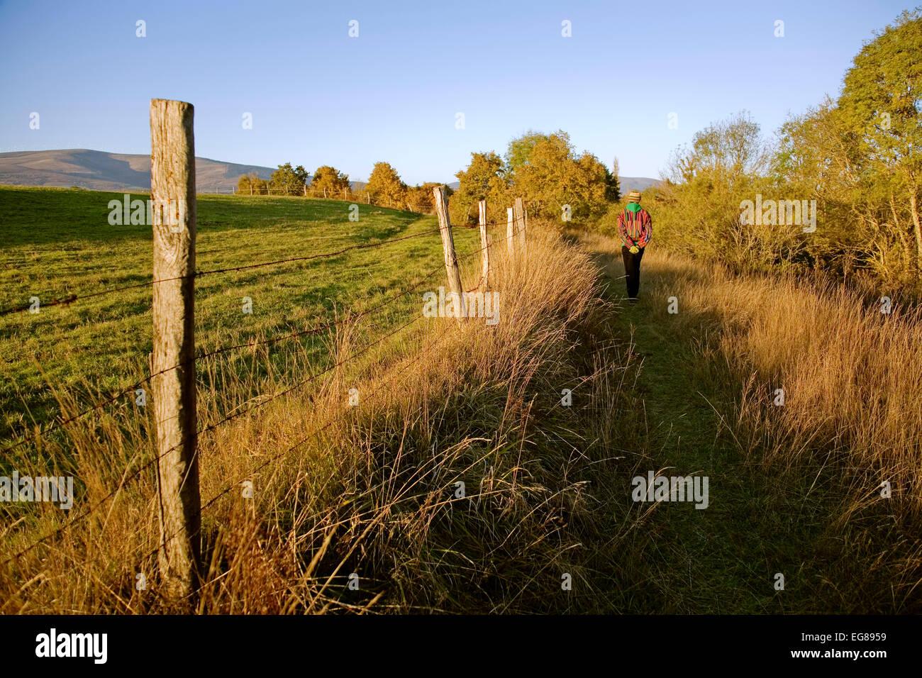 Woman walking on a trail in the field villasante montija burgos castilla leon Spain mujer caminando por un sendero - Stock Image
