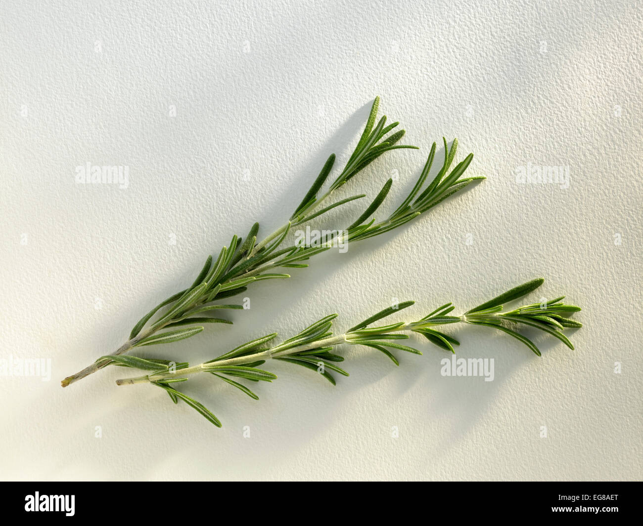 herbs: rosemary - Stock Image