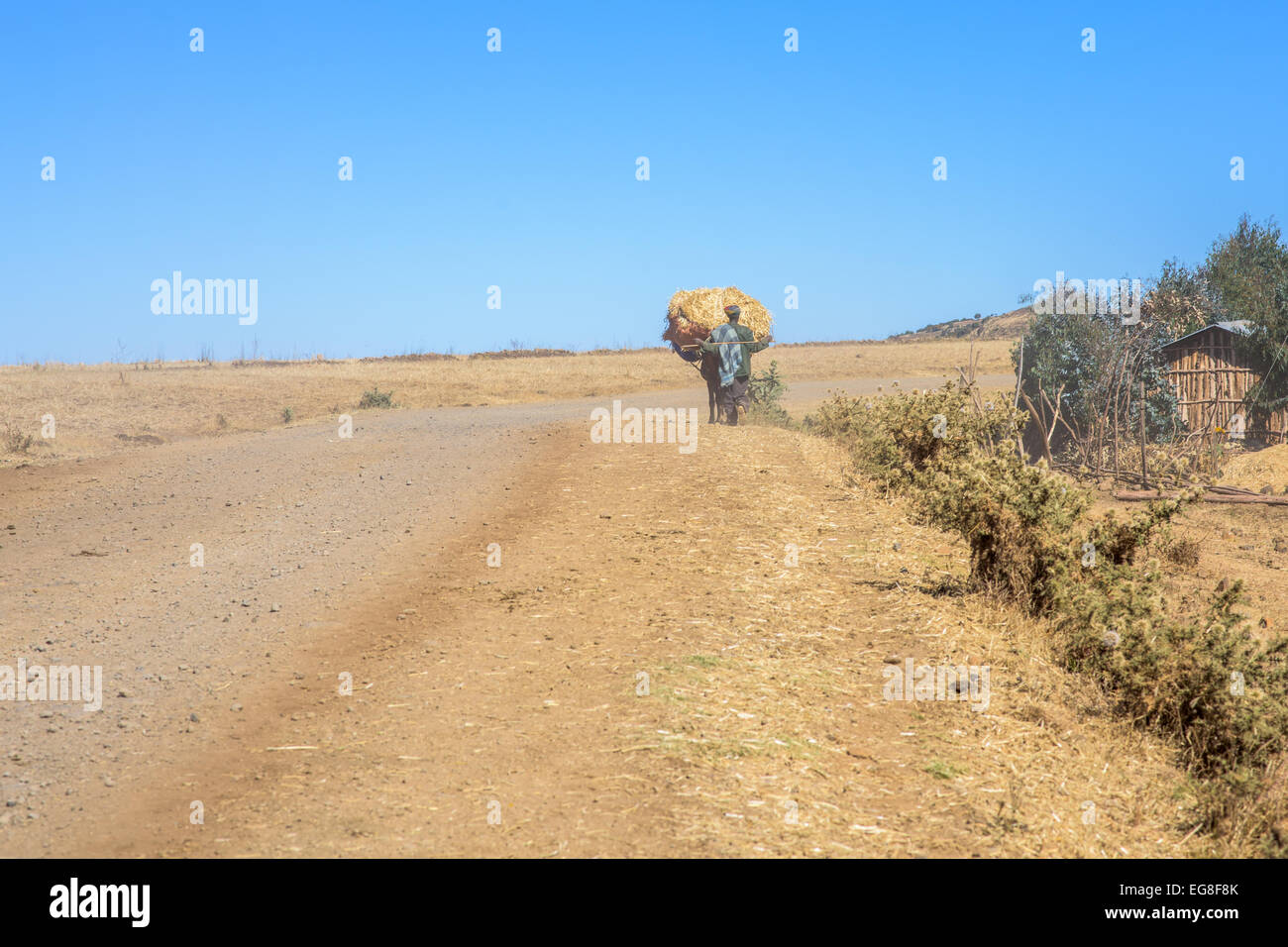 Local farmer in Simien Mountains in Ethiopia - Stock Image