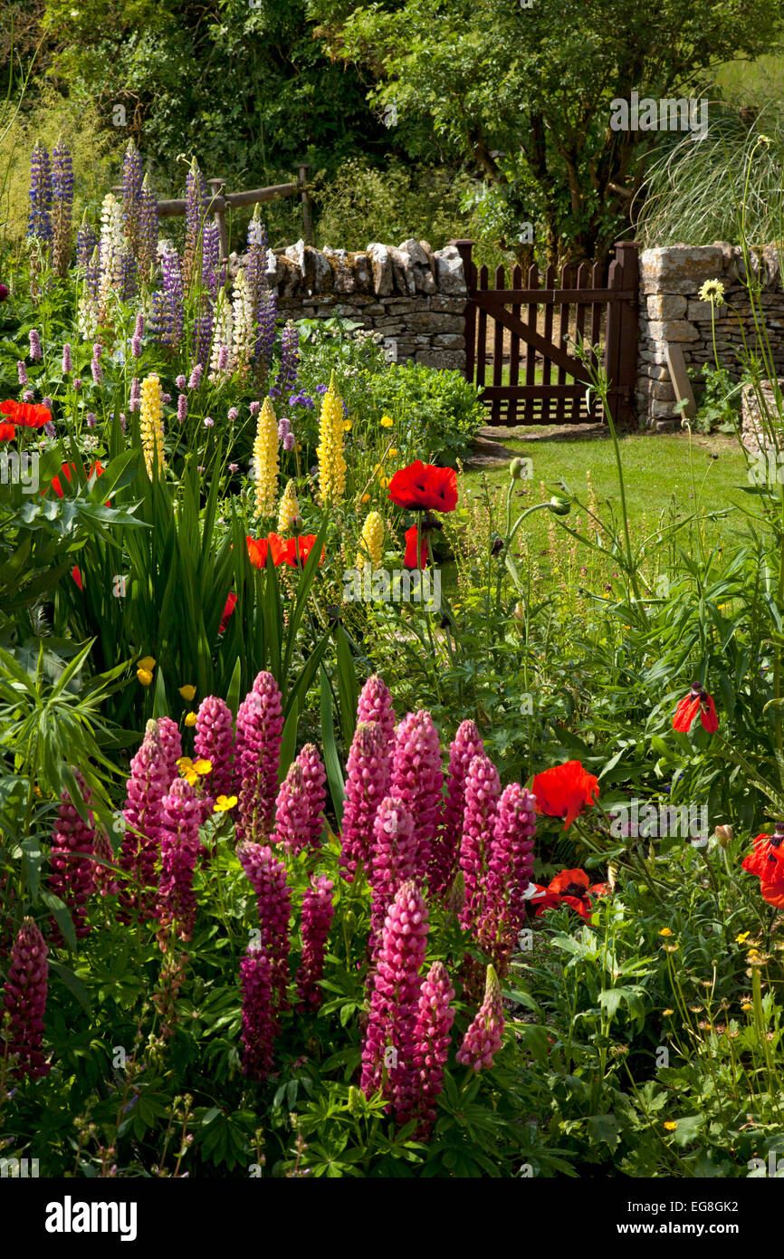 English country garden with lupins,poppies,dry stone wall and wooden gate,Oxfordshire,England - Stock Image