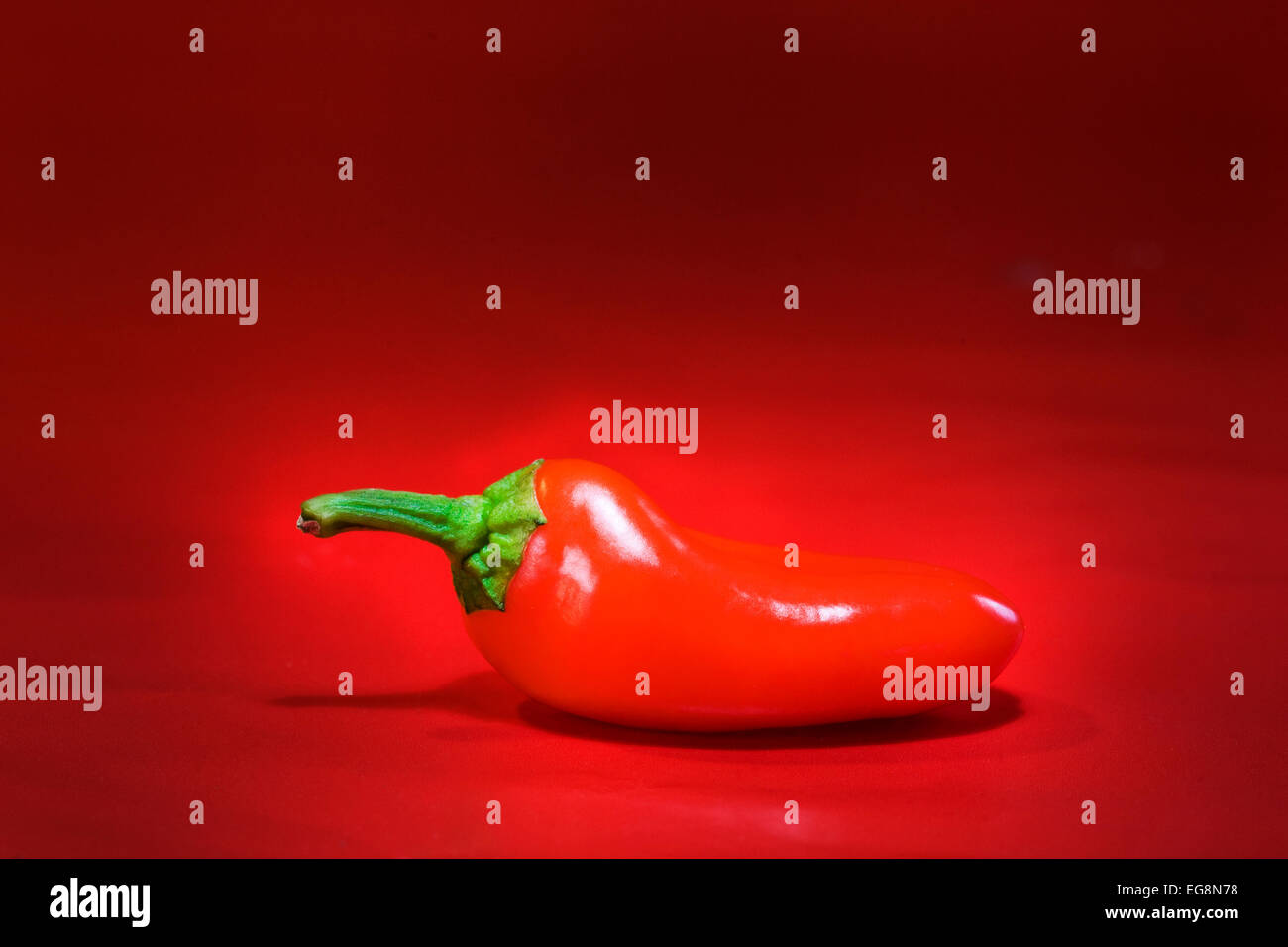 The perfect red chile pepper from the Hatch Valley in New Mexico - Stock Image