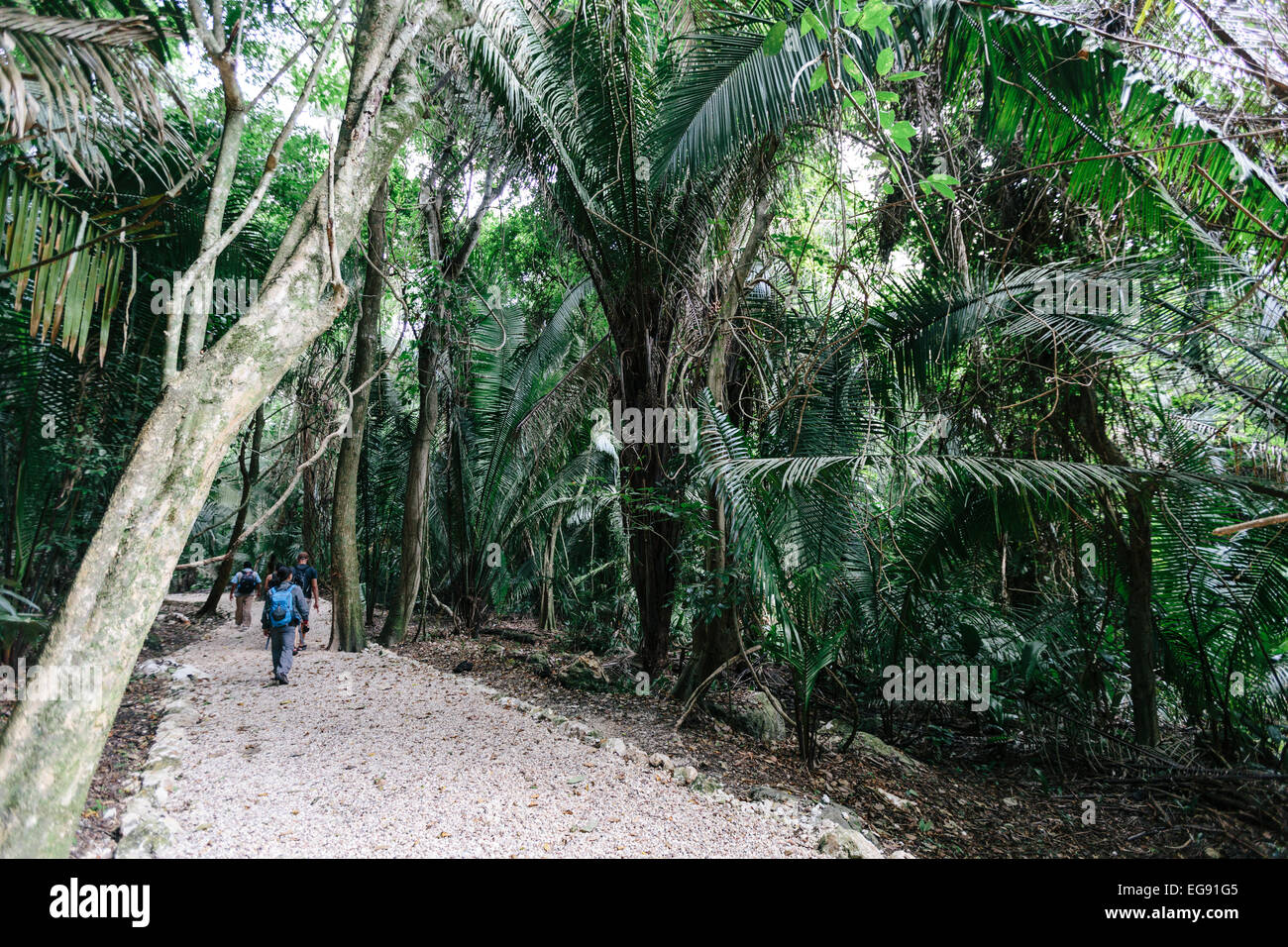Jungle Walk in Lamanai, Belize - Stock Image