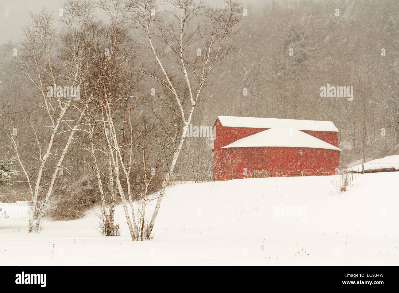 Birch trees and the Pakatakan Round Barn on a snowy winter's day in the Catskills Mountains of New York. - Stock Image