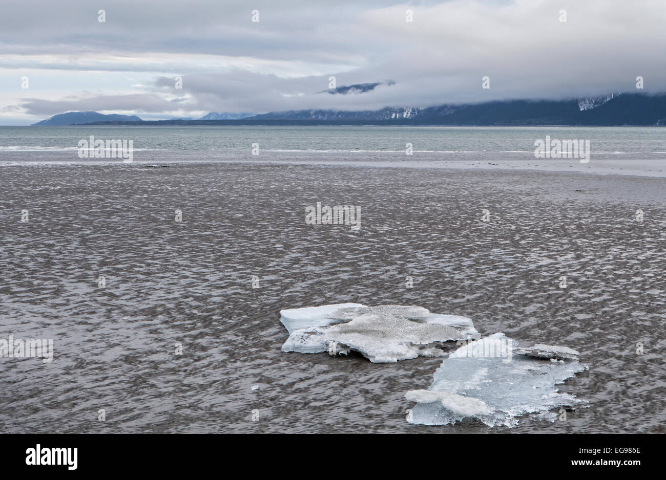 Ice bergs stranded on a Southeast Alaskan beach at low tide with clouds over mountains in the background. - Stock Image