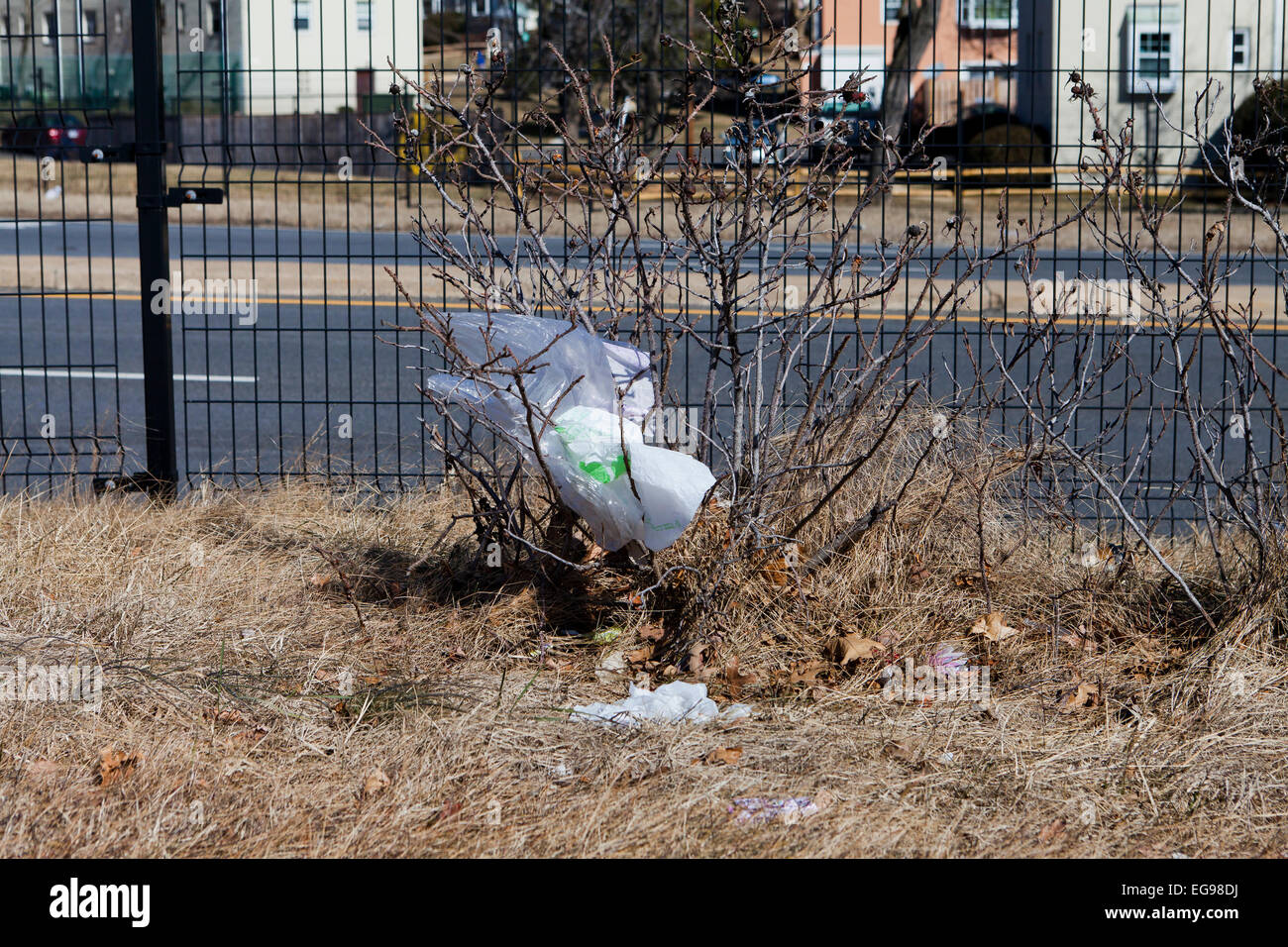 Plastic grocery bags stuck on roadside bushes - USA - Stock Image