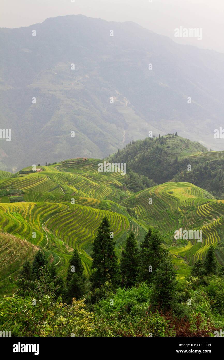 China, Guangxi, Longsheng county, View of Guilin Dragon's Backbone rice terraces - Stock Image