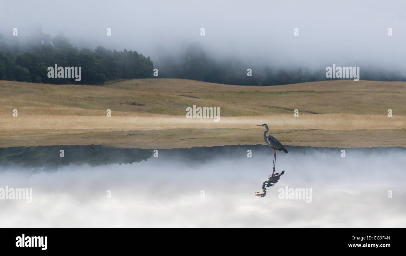 Crane in lake at dawn - Stock Image
